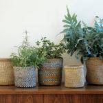 Planters-closeup
